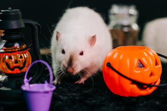 Things That Go Bump in the Night - Scary Pest Facts