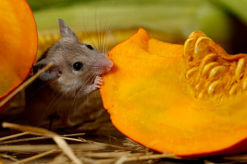 Something to be Thankful For: A Pest-Free Home