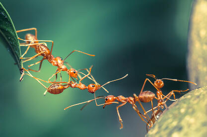 Ants are Marching