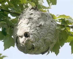 Massachusetts bee control