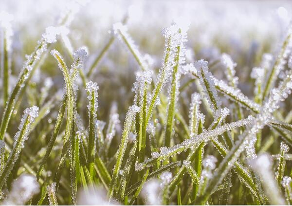 How Weather Affects Pest Pressure