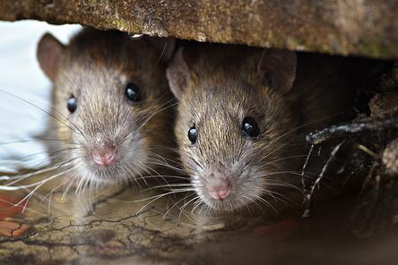 Where Pests Hide in Your Home