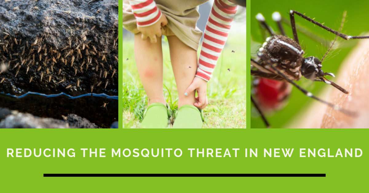 mosquito and tick control in massachusetts