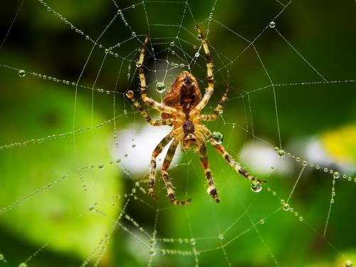 spiders in massachusetts